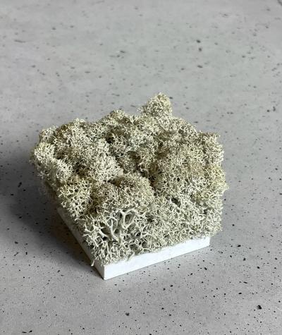 Moss sampler