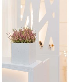 CT series - Concrete flower pot (anthracite)