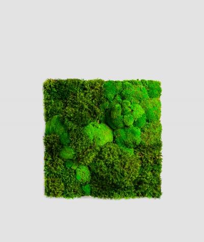 Moss - composition MK6