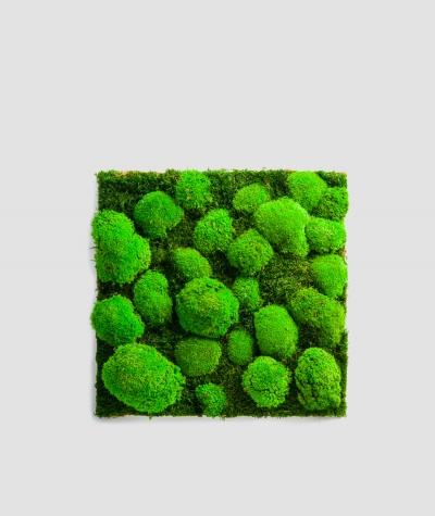 Moss - composition MK5