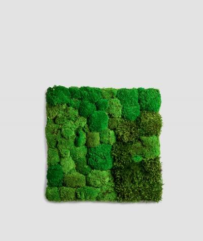 Moss - composition MK4