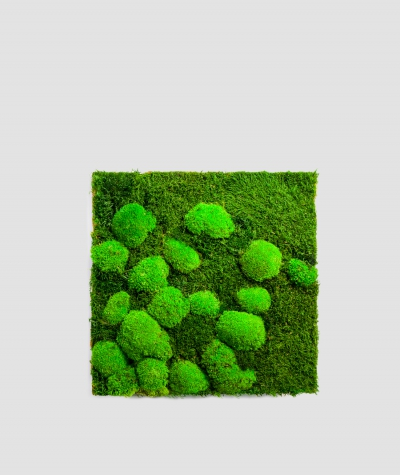 Moss - composition MK3