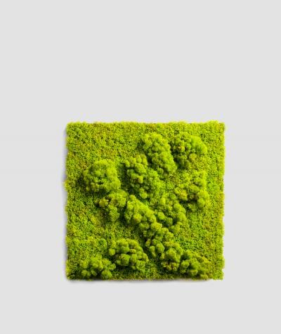 Moss - composition MK2