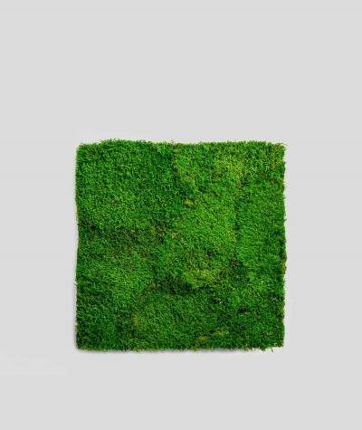 Flat forest moss (forest green L01)