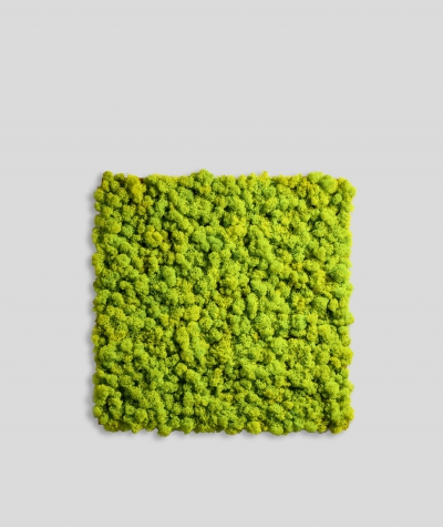 Chrobotek FLEXY, mech reniferowy islandzki (001 wasabi)