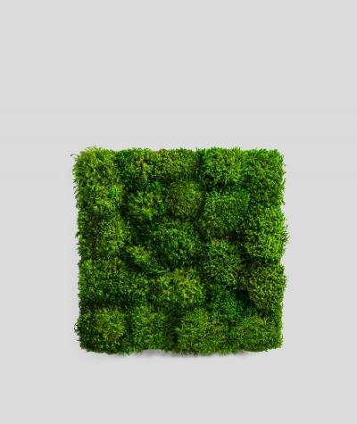 Mech leśny prowansalski (naturalny P00)
