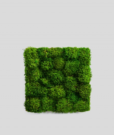 Provencal forest moss (natural P00)