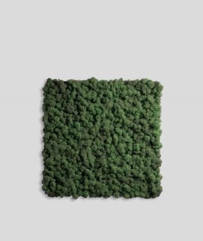 Chrobotek, mech reniferowy islandzki (009 ciemna leśna zieleń) - basic