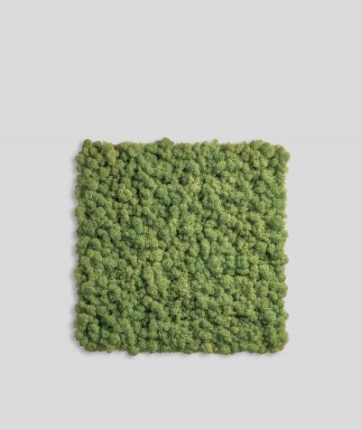 Chrobotek, mech reniferowy islandzki (005 leśna zieleń) - basic